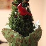 O Rosemary Tree