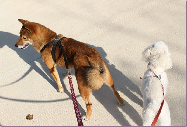 dogs (2)