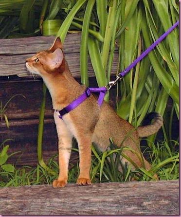 BB-leash