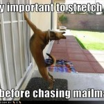 funnydogpicturesimportantstretch.jpg