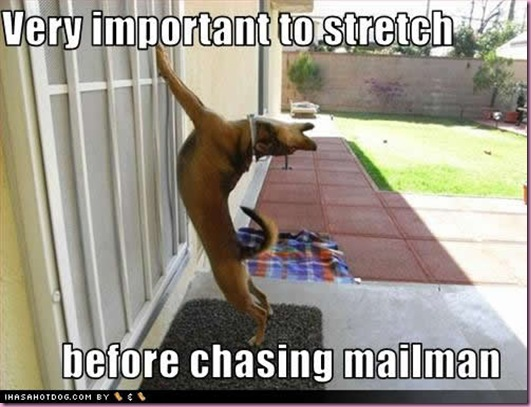 funny-dog-pictures-important-stretch