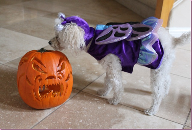 bella the butterfly and a pumpkin