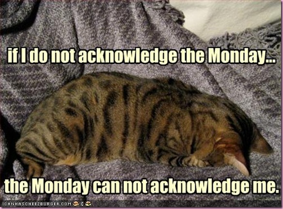 funny-pictures-cat-does-not-acknowledge-monday