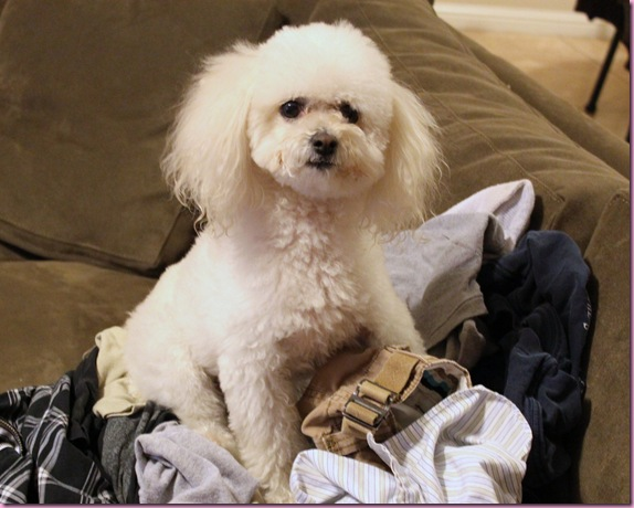 bella on the laundry