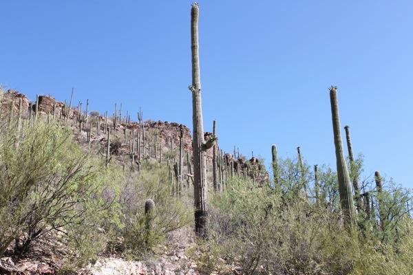 Sabino canyon3