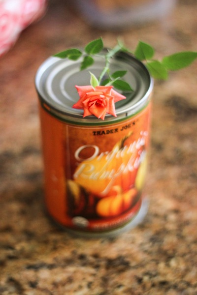 Rose and pumpkin