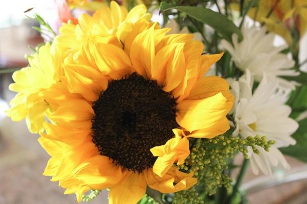 Sunflower  1 of 1