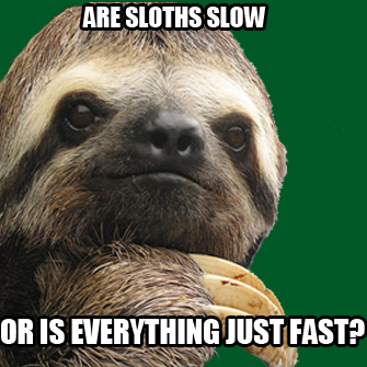 Sloths slow or everything fast meme