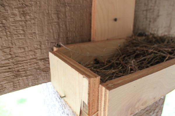 Bird  1 of 1