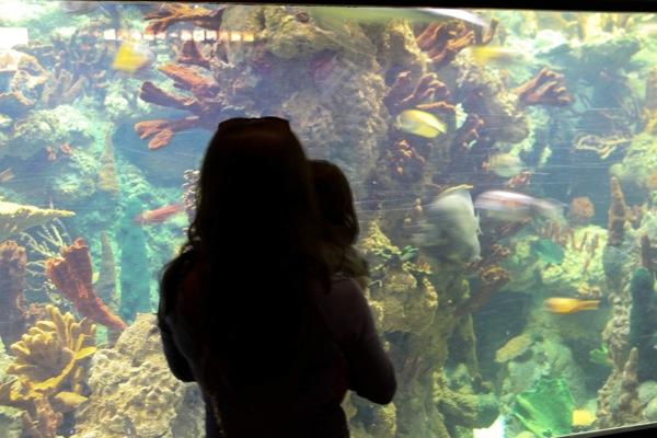 Sea world  1 of 1