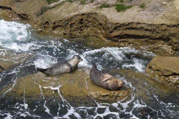 Seals  1 of 1 3