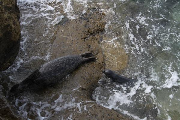 Seals  1 of 1 6