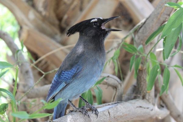 Bird  1 of 1 2