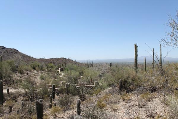 Desert  1 of 1