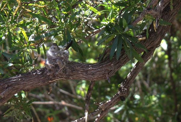 Hummingbird  1 of 1 2