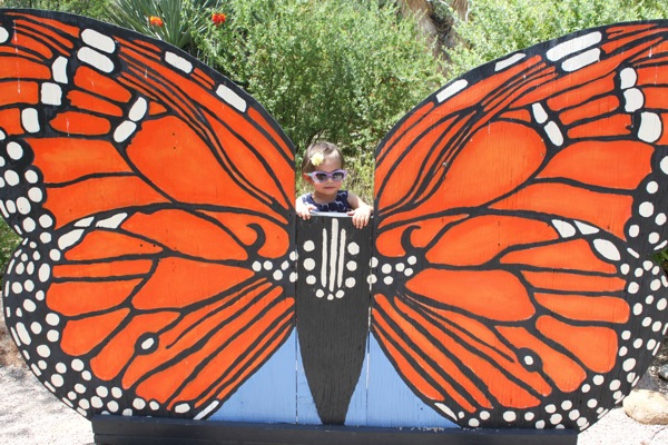 Butterfly  1 of 1 2