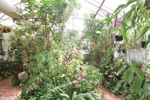 Orchid room  1 of 1