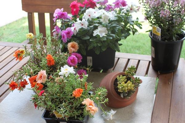 Plants  1 of 1