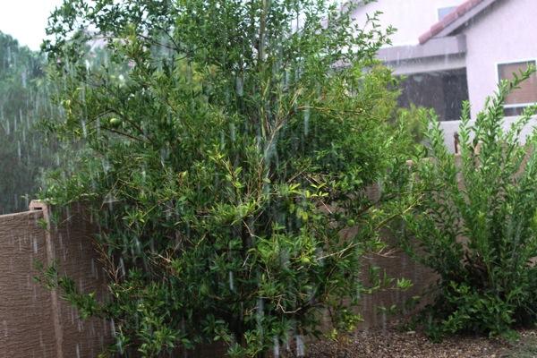 Rain  1 of 1