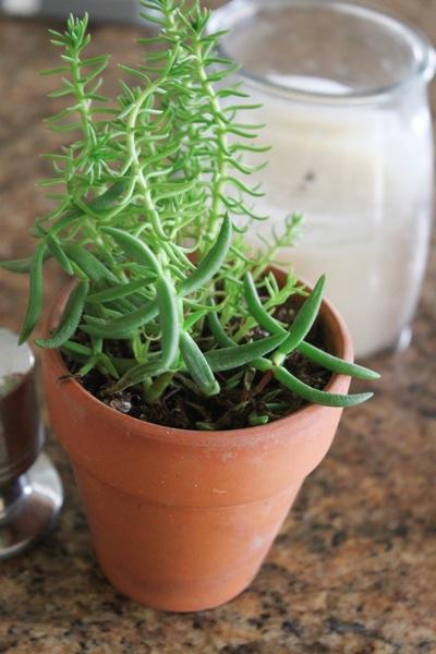 Succulent  1 of 1