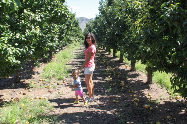 Picking apples  1 of 1 6