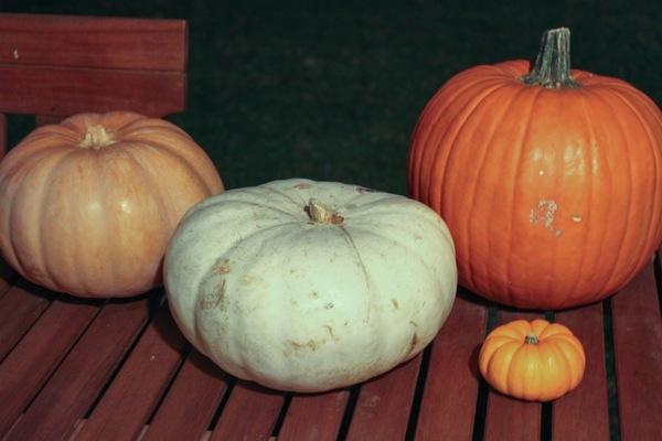 Pumpkins  1 of 1