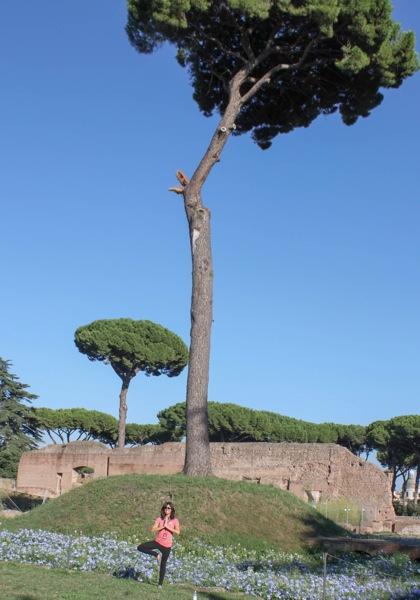 Tree  1 of 1
