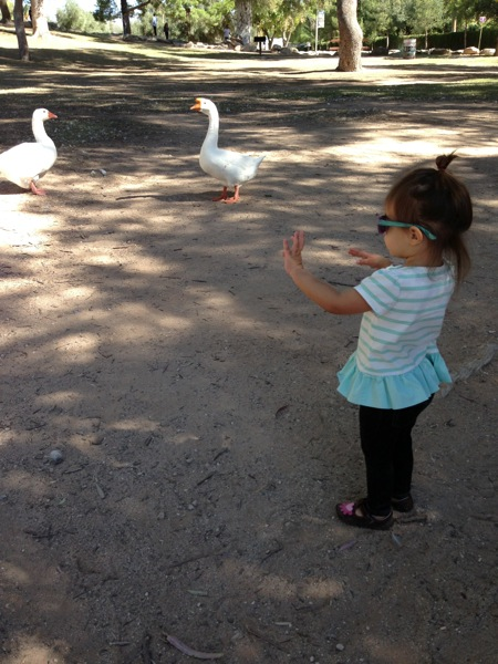 Liv feeding the ducks