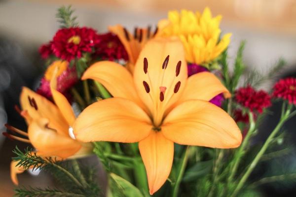 Flowers  1 of 1 6