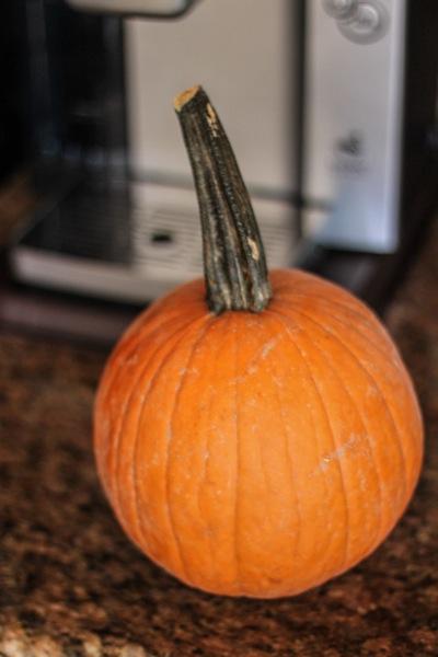 Pumpkin  1 of 1 2