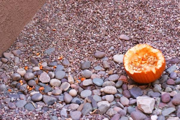 Pumpkin feast  1 of 1