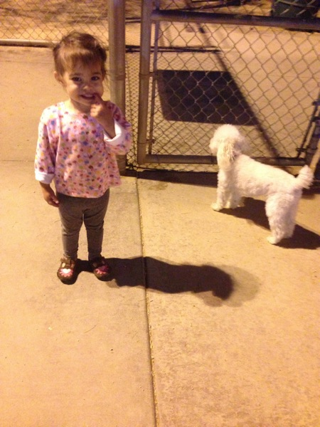 dog park with Livi and Bella