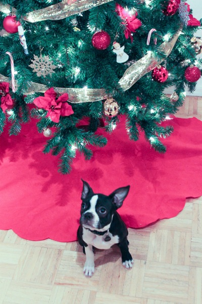 Luna puppy in front of Christmas tree