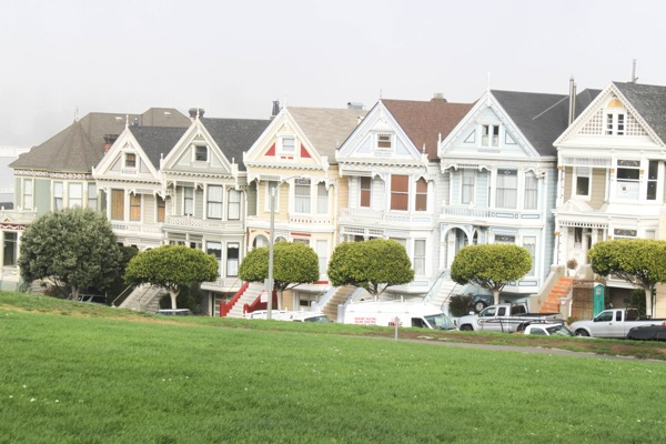 Painted ladies  1 of 1