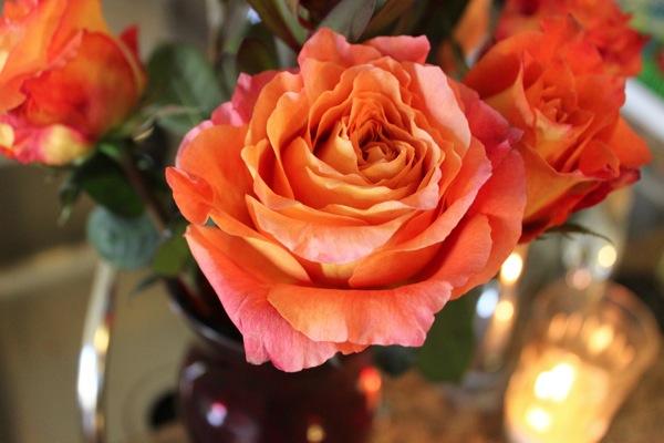 Rose  1 of 1