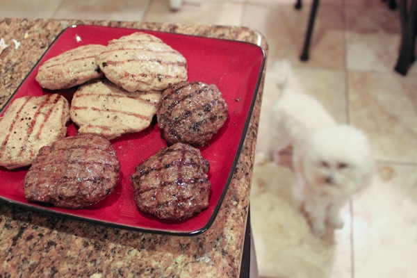 Bella and burgers  1 of 1