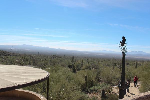 Desert museum  1 of 1 5