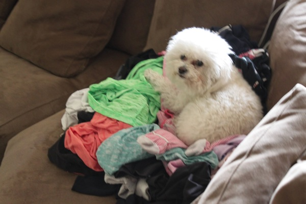 Laundry mountain  1 of 1