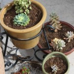 succulents (1 of 1)-2.jpg