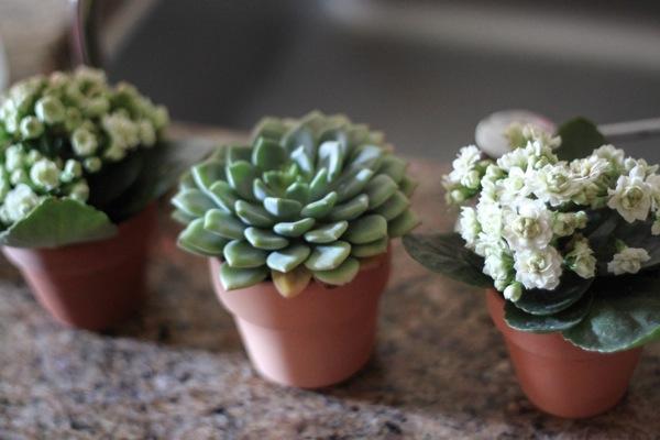 Tiny plants  1 of 1