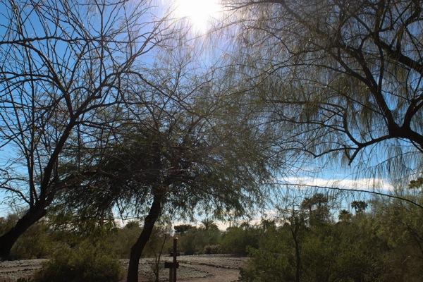 Phoenix  1 of 1