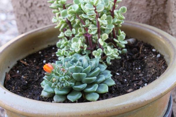 Succulent  1 of 1 2