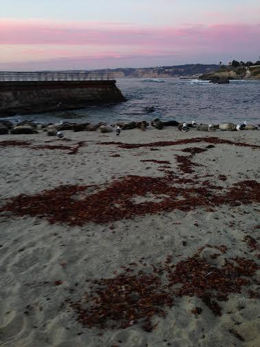 A jolla seals