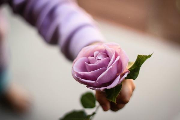 Rose  1 of 1 3