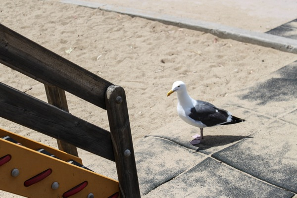 Seagull at the park