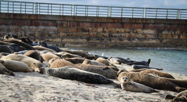 Seals  1 of 1