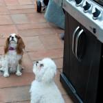 begging dogs (1 of 1).jpg