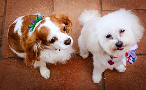 Crazy pups  1 of 1