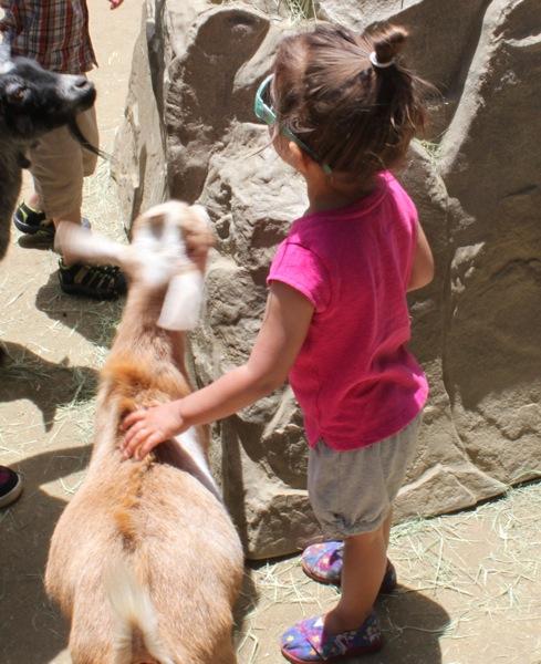 Feeding the goat  1 of 1
