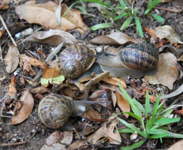 Snails  1 of 1
